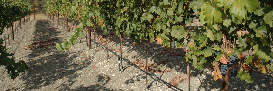 vines-green_300
